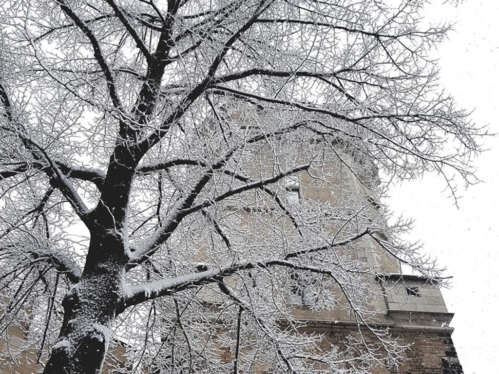 Bayenturm mit verschneitem Baum (Quelle: FMT)